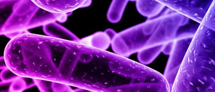 Teorías Relativas Blog: «Las bacterias que nos habitan»